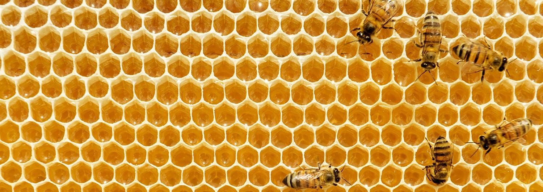 Las abejas son una fuerza indispensable para la naturaleza ¿Cómo podemos cuidarlas?